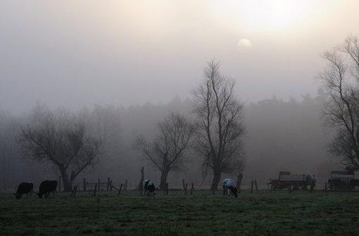Kühe auf der Weide Foto: dpa