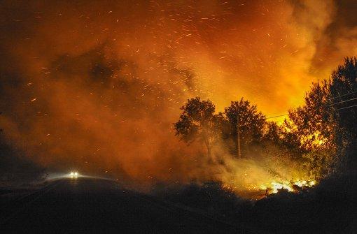Warum Wälder brennen