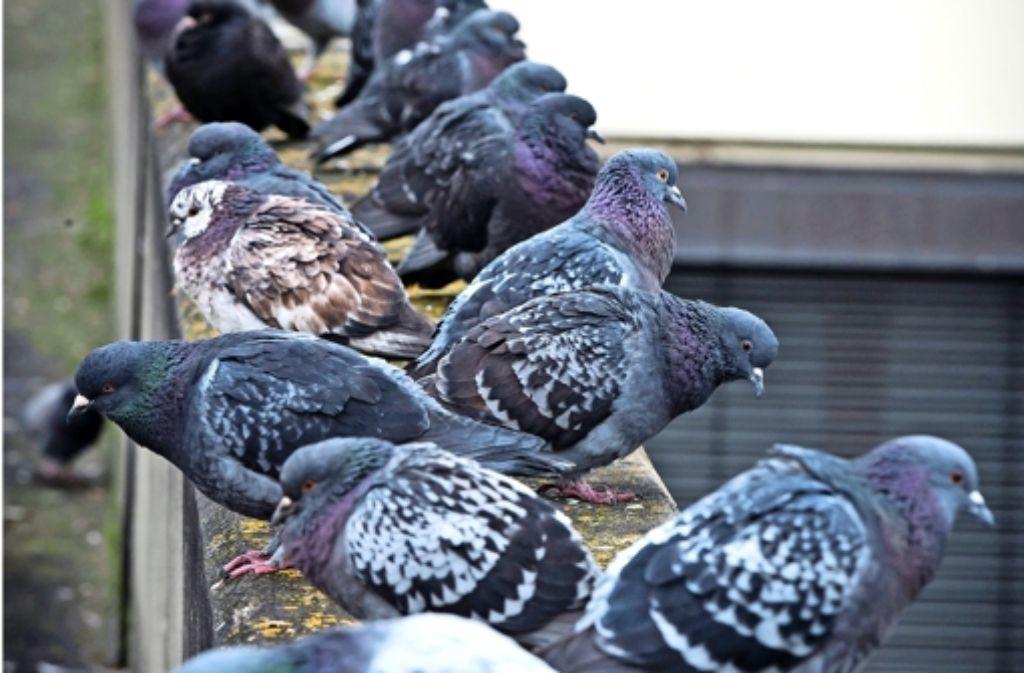 Taubendrecken Die besten Haken-Bars in der Philly