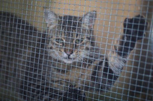 Tierheim Baden Baden Katzen