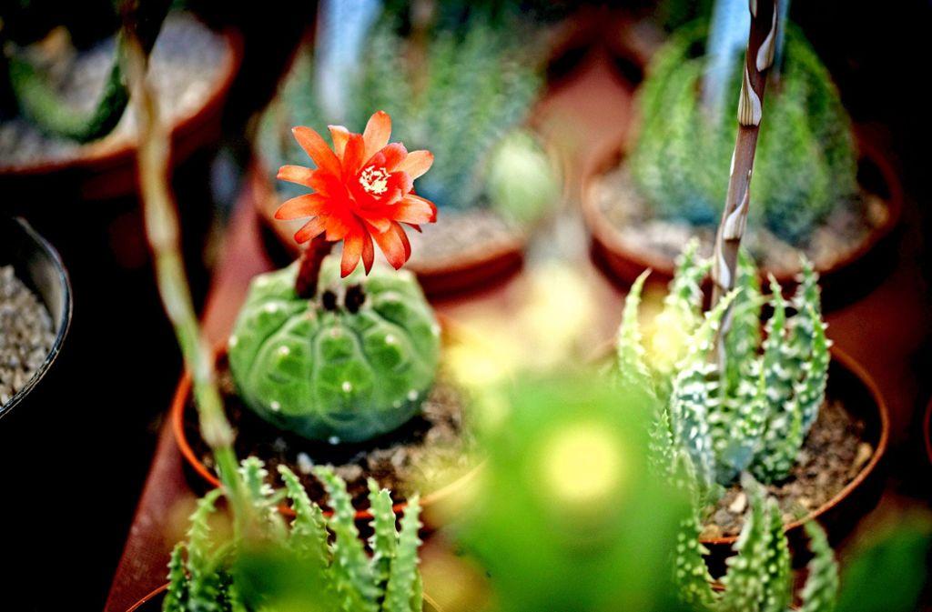 kaktus neuendettelsau