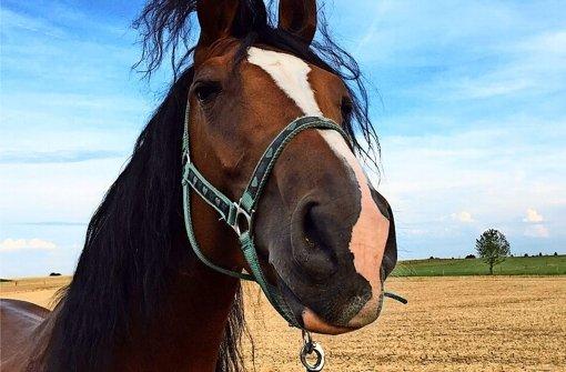 Viele wollen dem Pferd Capi helfen