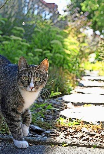 Oftmals ist es leider so, dass vermisste Katzen überfahren worden sind. Foto: dpa