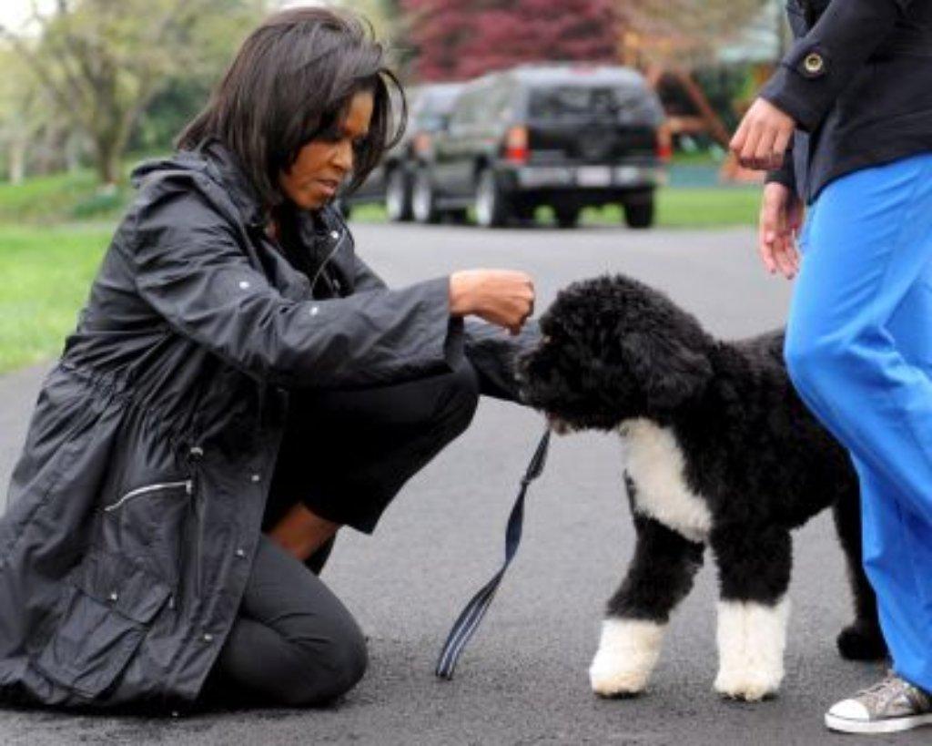 Nur 150 Exemplare: Obamas Wasserhund ist eine Rarität - News