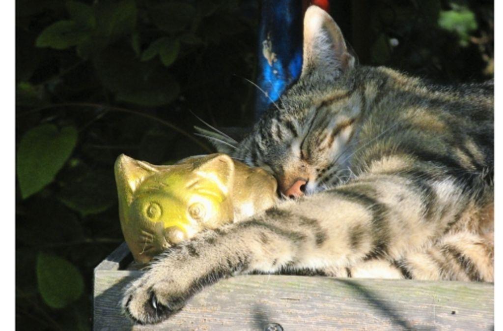 Katze Wasser In Der Lunge