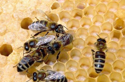 fragen rund um honig heilmittel oder nektar der g tter web wissen stuttgarter nachrichten. Black Bedroom Furniture Sets. Home Design Ideas
