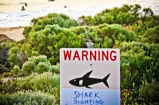 36-jähriger Surfer von Hai angegriffen
