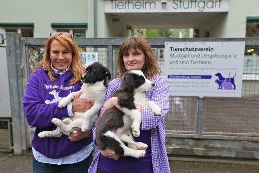 Diese alarmierende Nachricht verkündetet Tierheimleiterin Marion Wünn (rechts) auf einer Pressekonferenz am Mittwoch in Stuttgart-Botnang. Unter anderem suchen diese Vierbeiner ein neues Zuhause ... Foto: Fotoagentur Beytekin/Weiberg