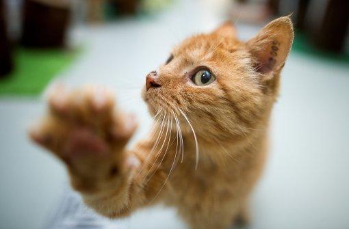 Katze ausgewichen und schwer verletzt
