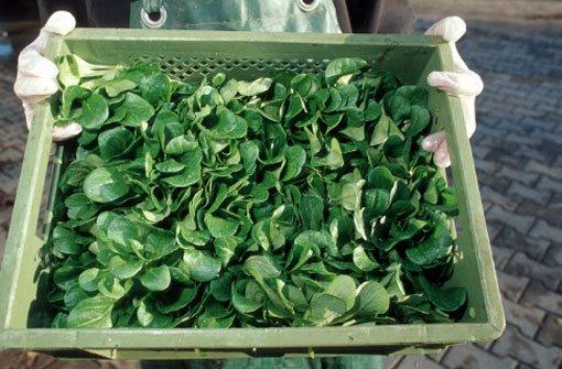 Feldsalat gegen schlechte Winterlaune