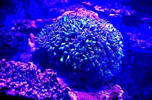 naturkundemuseum karlsruhe korallen machen haifisch kalli konkurrenz baden w rttemberg. Black Bedroom Furniture Sets. Home Design Ideas