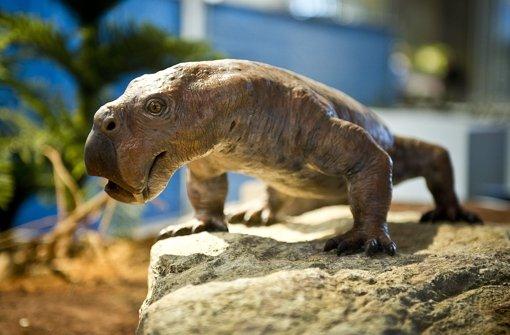 Sieht recht gefährlich aus, war aber ein Pflanzenfresser: Diictodon lebte im Perm (299 bis 252 Millionen Jahre), erreichte das Gewicht eines Bullen und war ein Vorfahre der Säugetiere. Foto: Max Kovalenko