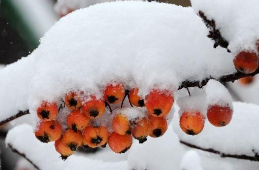 Mehr als überzuckert: Auf der Schwäbischen Alb und im Schwarzwald gab es teilweise bis zu 25 Zentimeter Neuschnee. Foto: dpa