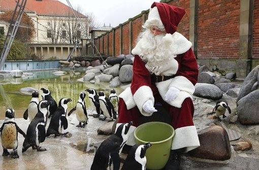 Am 6. Dezember und an den Adventssonntagen gastieren der Nikolaus und der Weihnachtsmann in der Wilhelma in Stuttgart. Foto: Wilhelma