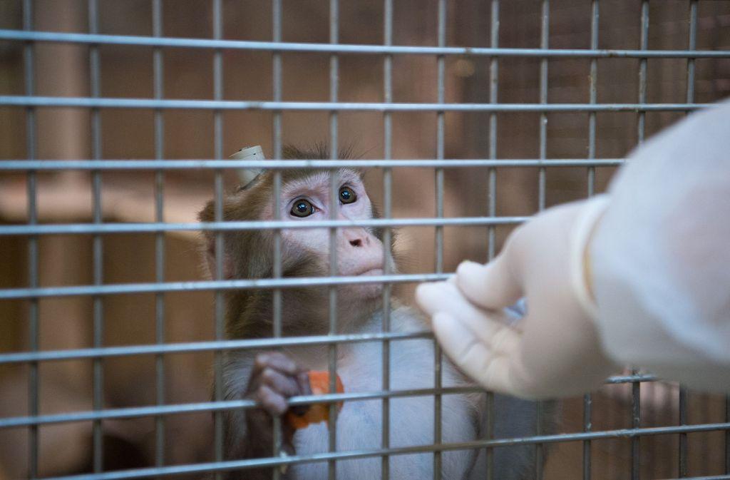 Tierversuche Tübingen
