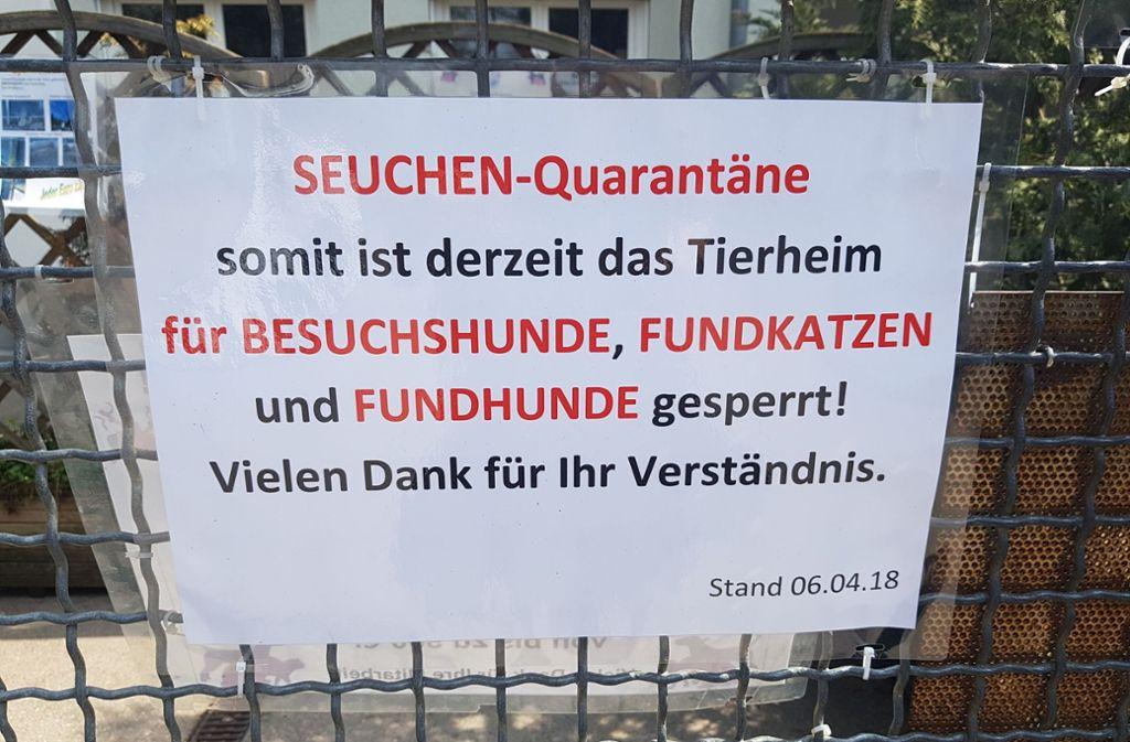 Illegaler Welpentransport Kraftakt Fur Stuttgarter Tierheim Stuttgart Stuttgarter Nachrichten