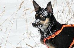 Kinder in Begleitung eines Erwachsenen dürfen mit einem Hund aus dem bTierheim Botnang/b (Furtwänglerstraße 150) Gassi gehen. Bei einem Spaziergang haben der Kumpel auf vier Pfoten und sein Herrchen oder Frauchen auf Zeit sicher einen Riesenspaß.pa href=http://www.175-jahre-stuttgarter-tierschutz.de/ target=_blankImmer der Leine nach/a/p Foto: Leserfotograf lupo