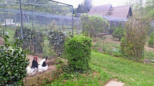 Ein Kleinod für  Hühner und Co.