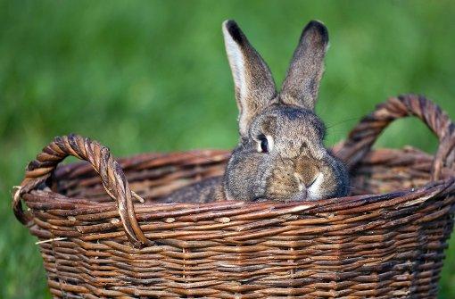 Kaninchen den Kopf abgetrennt