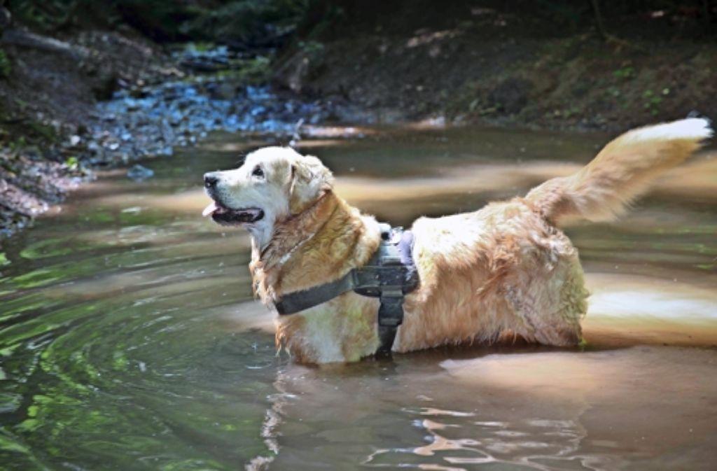 Badesee Hund