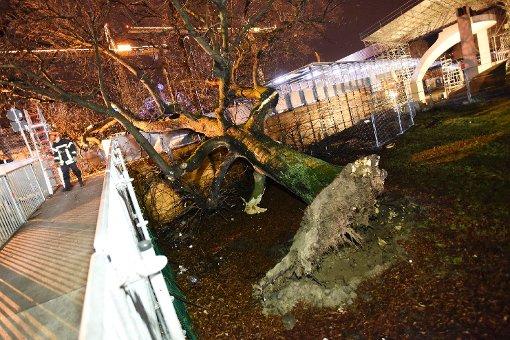 Baum fällt im Schlossgarten auf Fußgängersteg