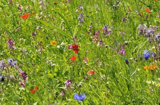 Blumenwiese Foto: dpa