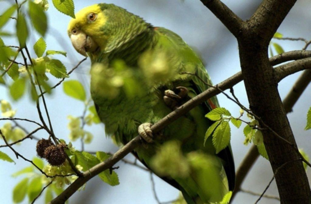 Papagei Gefunden