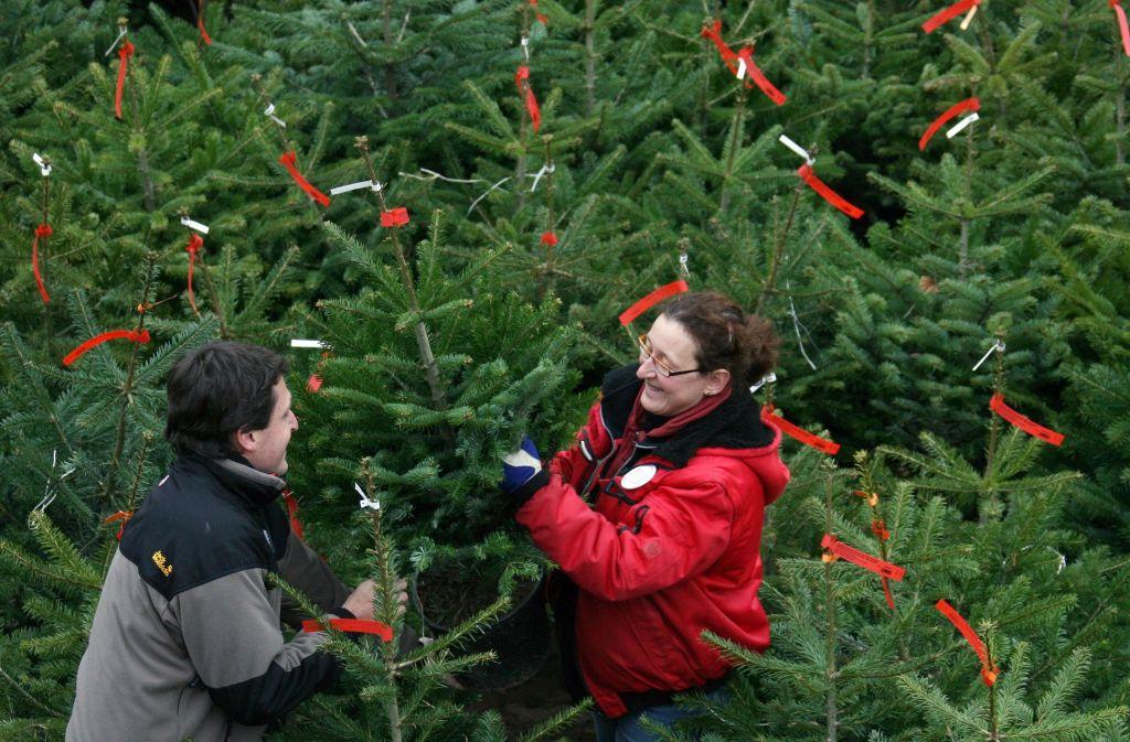 Douglasie Weihnachtsbaum Kaufen.Weihnachtsbaum Die Qual Der Wahl Beim Christbaum Panorama
