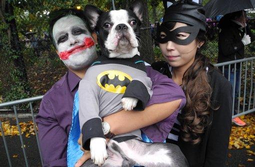 Batman und der Papst auf vier Beinen