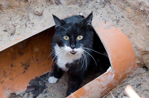 Katzenquäler: Peta sucht die Täter