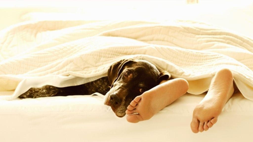 Geschlafen meinem ich hund mit habe Ein Welpe