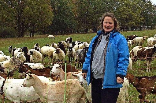 Schafen droht Schlachtung