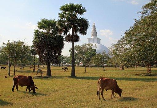 Eine Reise durch Sri Lanka