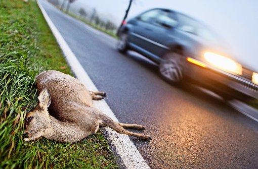 Wildwechsel: Gefahr für Mensch und Tier