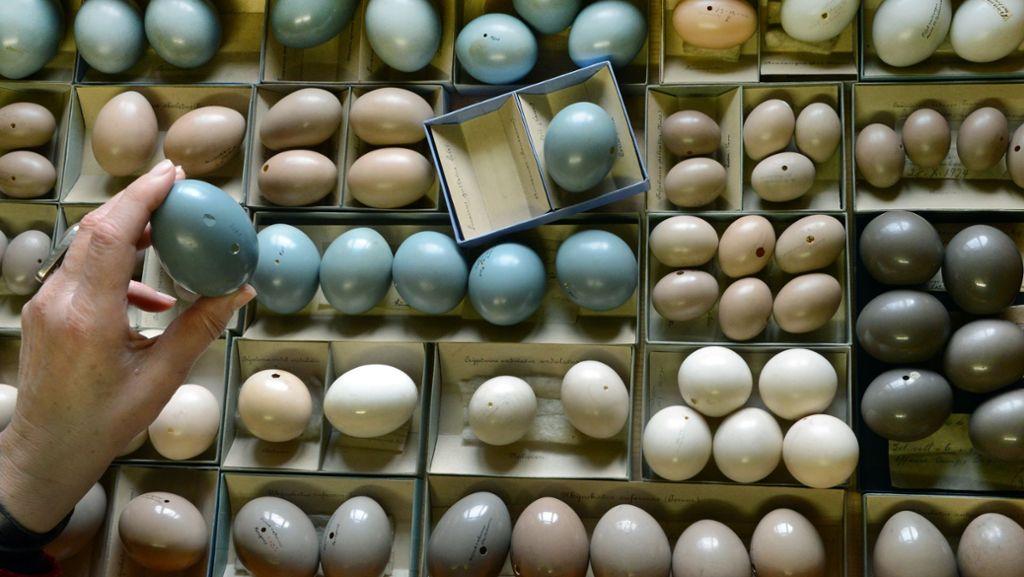 Naturlich Bunte Vogeleier Meister Im Eierfarben Wissen