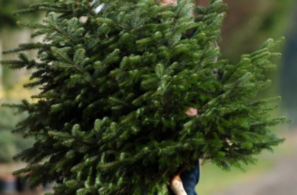 Deutscher Weihnachtsbaum.Weihnachtsbaum Zucker Im Wasser Hält Die Tanne Grün Stuttgarter